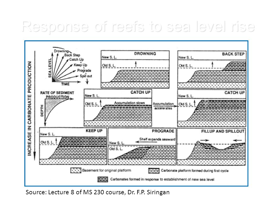 Response of reefs to sea level rise