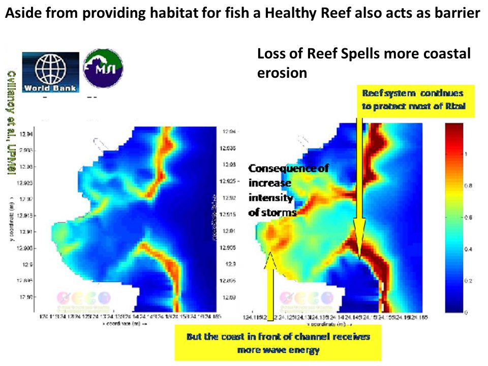 Loss of Reef Spells more coastal erosion