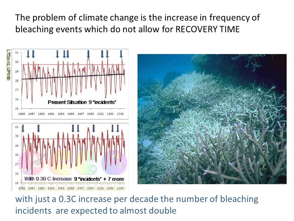 The problem of climate change is the increase in frequency of bleaching events which do not allow for RECOVERY TIME