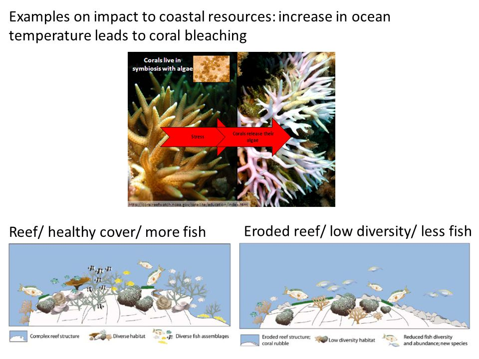 Reef/ healthy cover/ more fish Eroded reef/ low diversity/ less fish