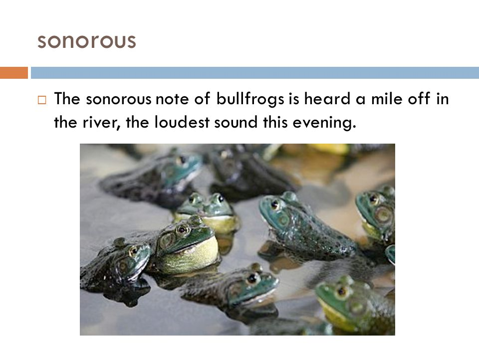 sonorous The sonorous note of bullfrogs is heard a mile off in the river, the loudest sound this evening.