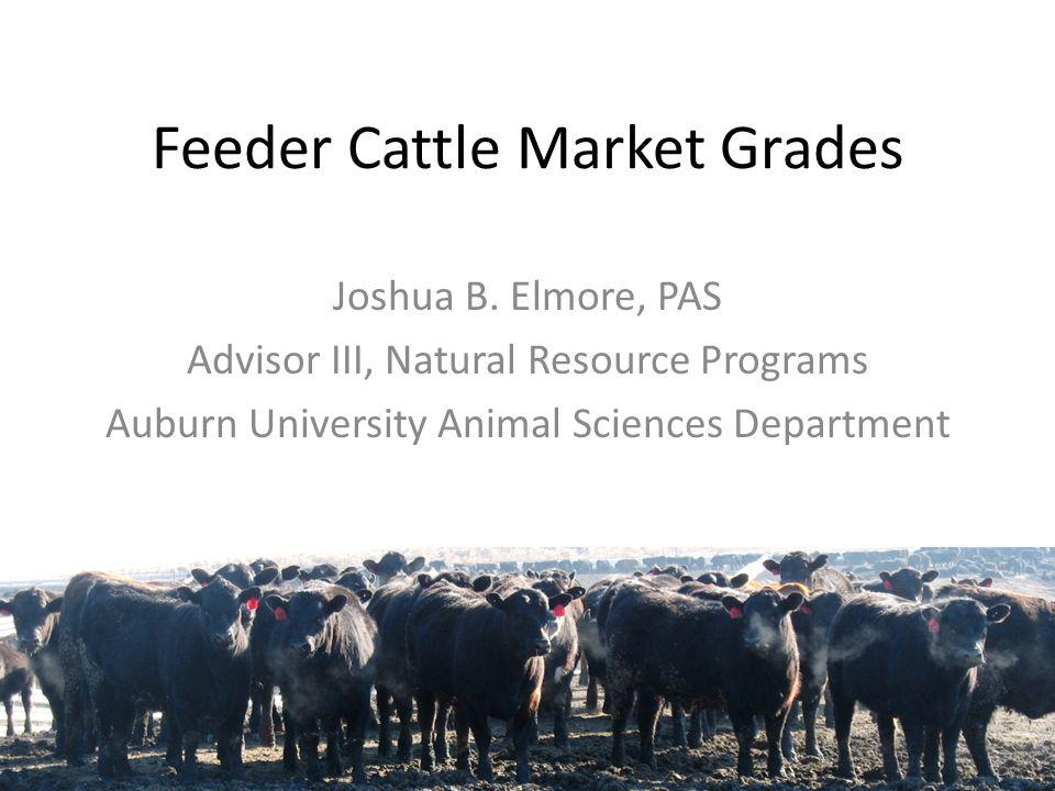 Feeder Cattle Market Grades