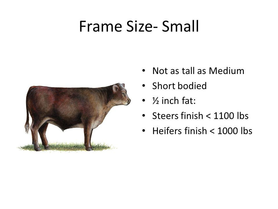 Frame Size- Small Not as tall as Medium Short bodied ½ inch fat: