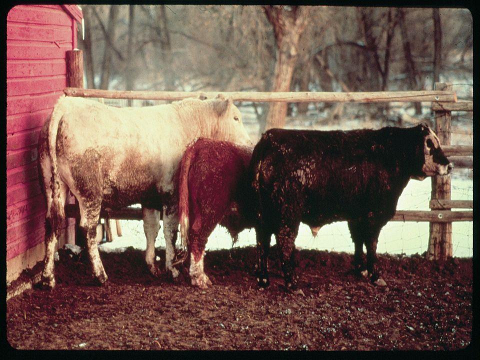 4/2/2017 USDA/MRP/AMS US Feeder Cattle Standards