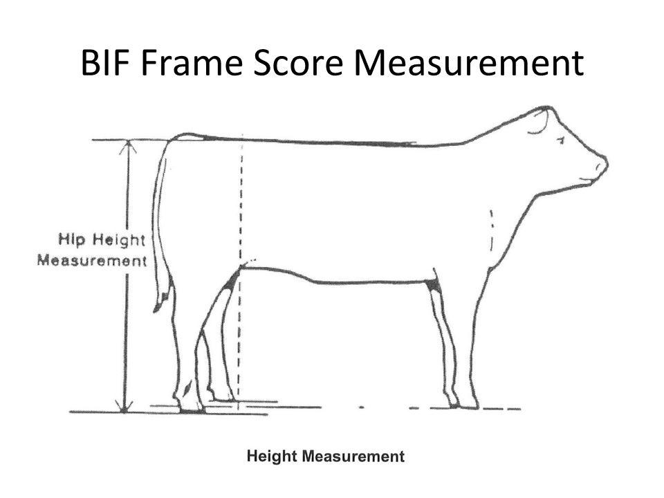 BIF Frame Score Measurement