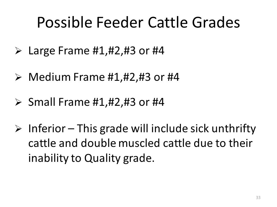 Possible Feeder Cattle Grades