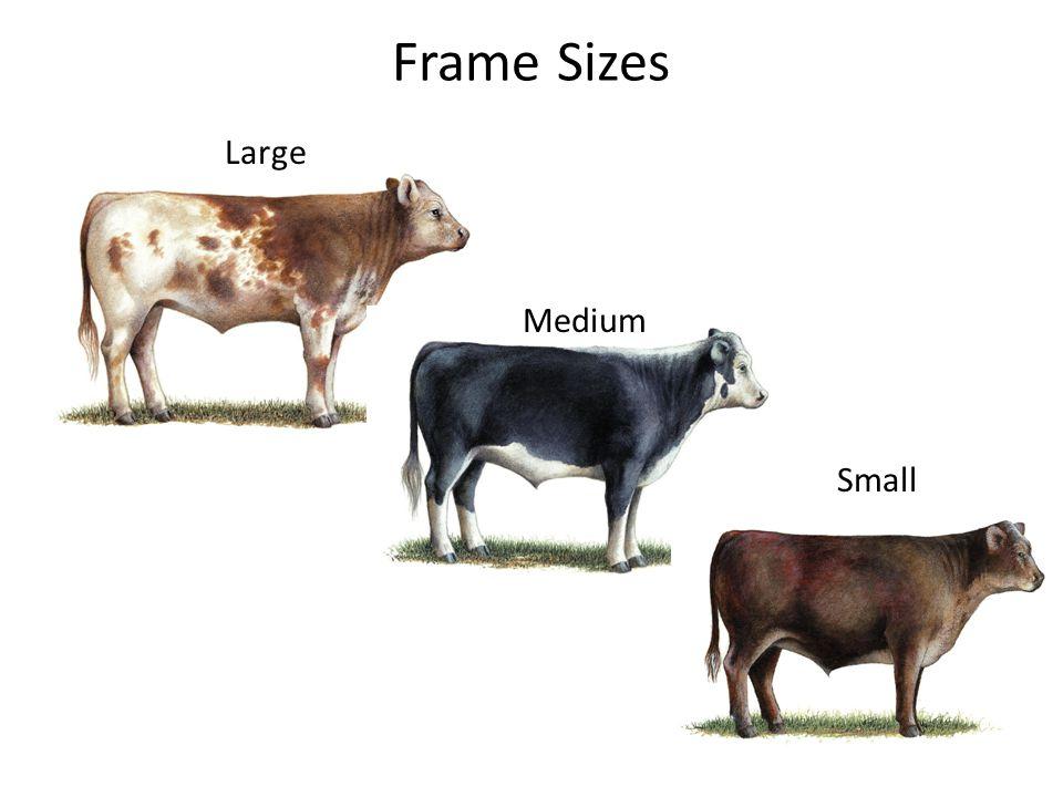 Frame Sizes Large Medium Small