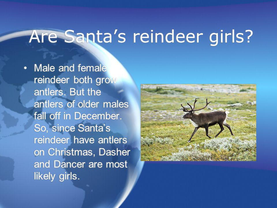 Are Santa's reindeer girls