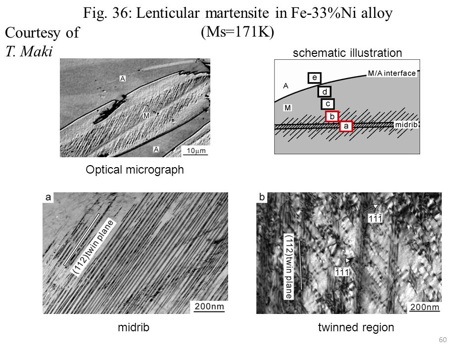Fig. 36: Lenticular martensite in Fe-33%Ni alloy (Ms=171K) Courtesy of