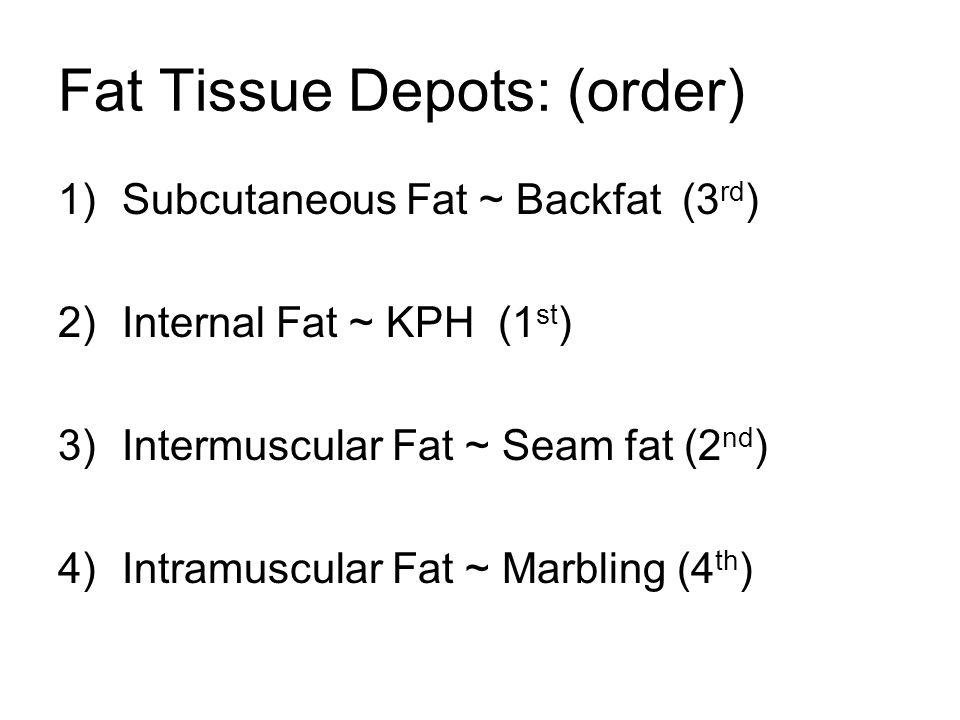 Fat Tissue Depots: (order)