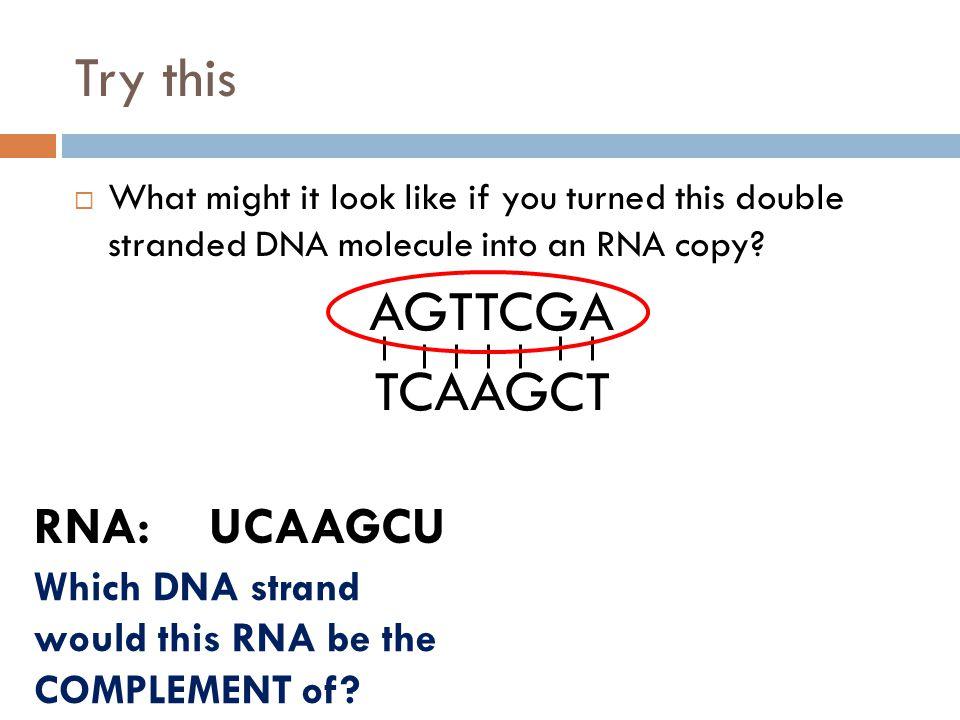 Try this AGTTCGA TCAAGCT RNA: UCAAGCU
