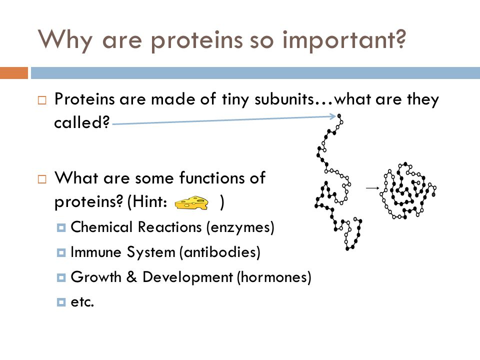 Why are proteins so important
