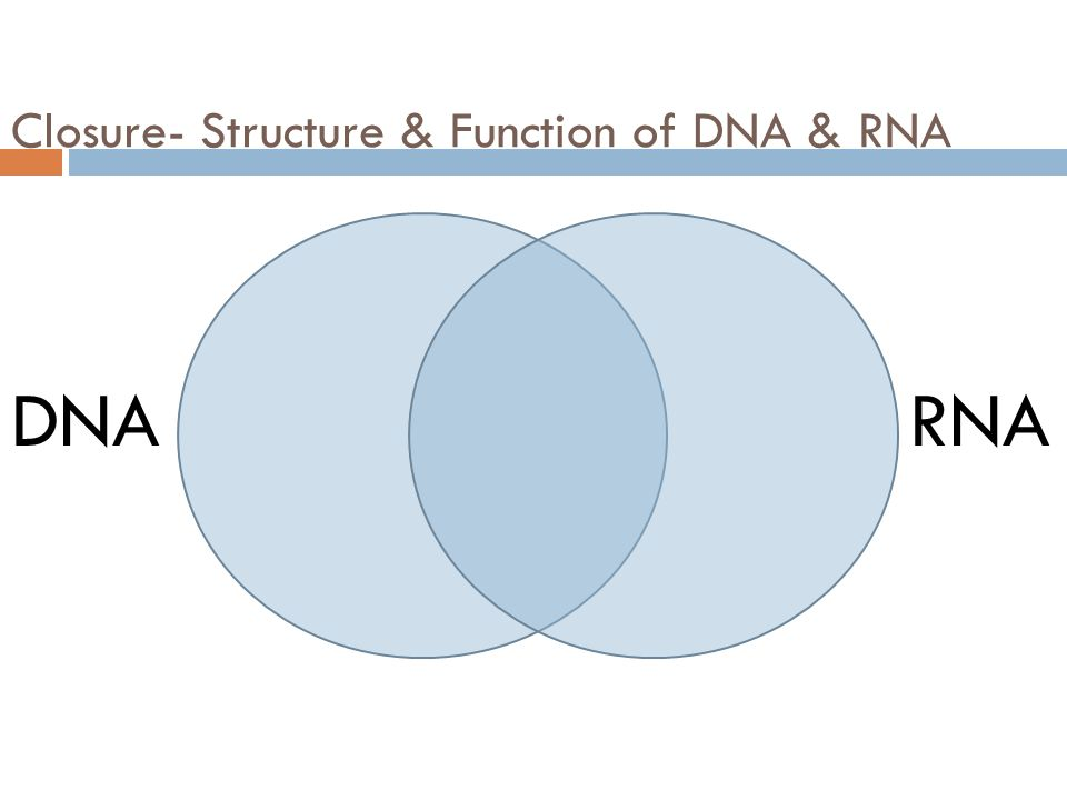 Closure- Structure & Function of DNA & RNA