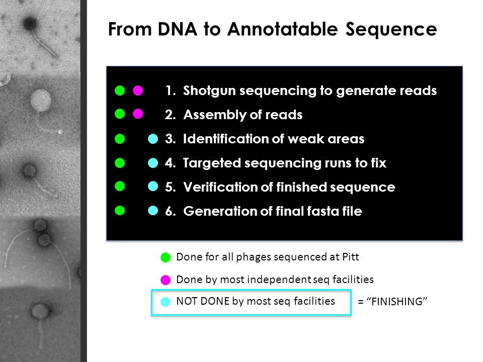 From DNA to Annotatable Sequence