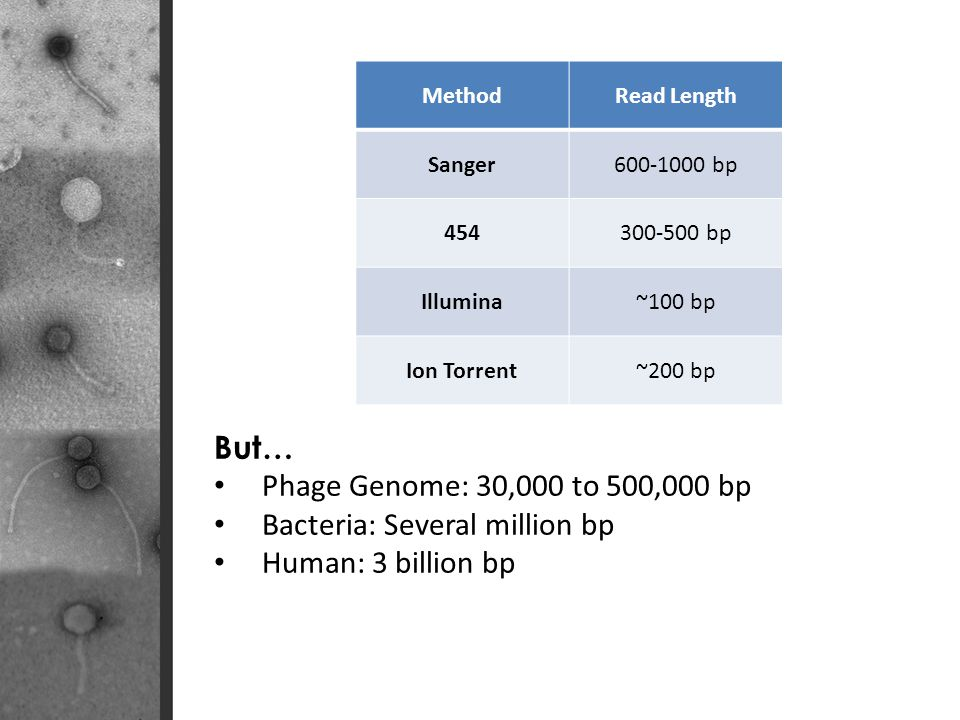Bacteria: Several million bp Human: 3 billion bp