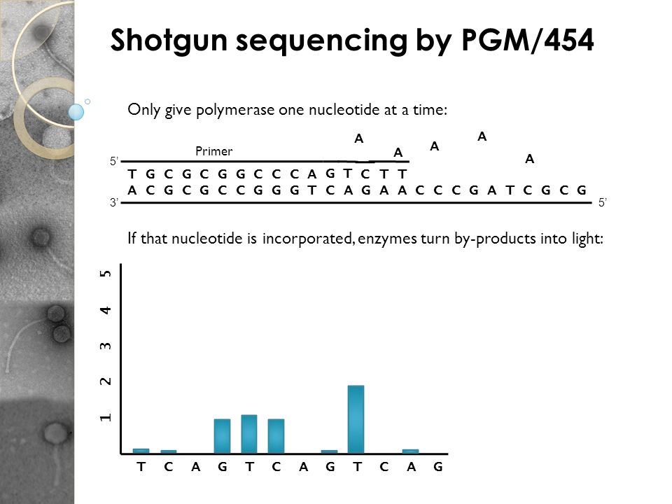 Shotgun sequencing by PGM/454