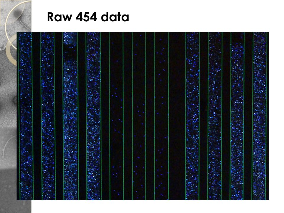 Raw 454 data Only give polymerase one nucleotide at a time: