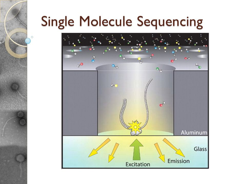 Single Molecule Sequencing