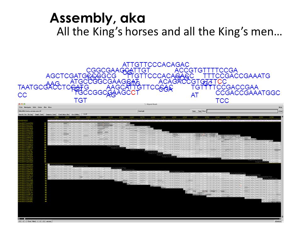 All the King's horses and all the King's men…