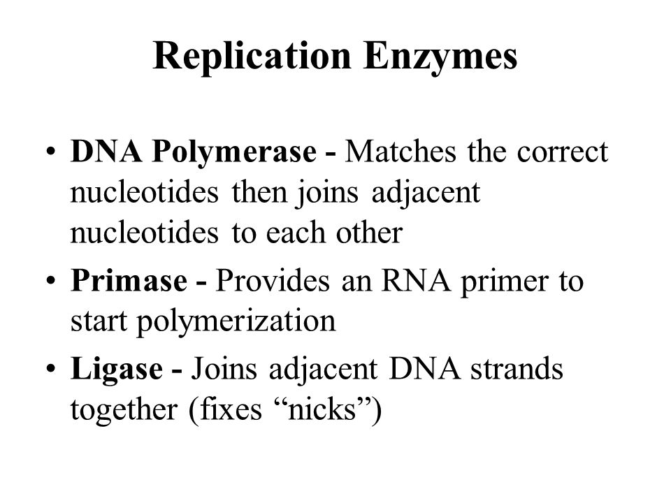 Replication Enzymes DNA Polymerase - Matches the correct nucleotides then joins adjacent nucleotides to each other.