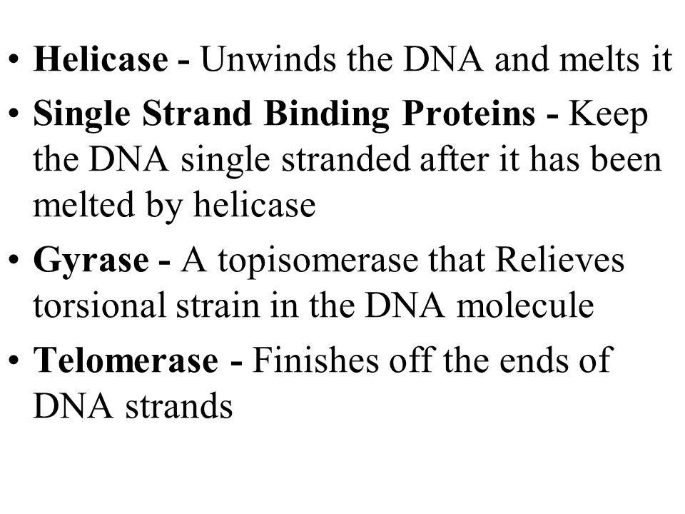 Helicase - Unwinds the DNA and melts it