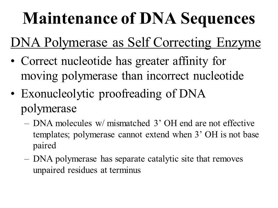 Maintenance of DNA Sequences