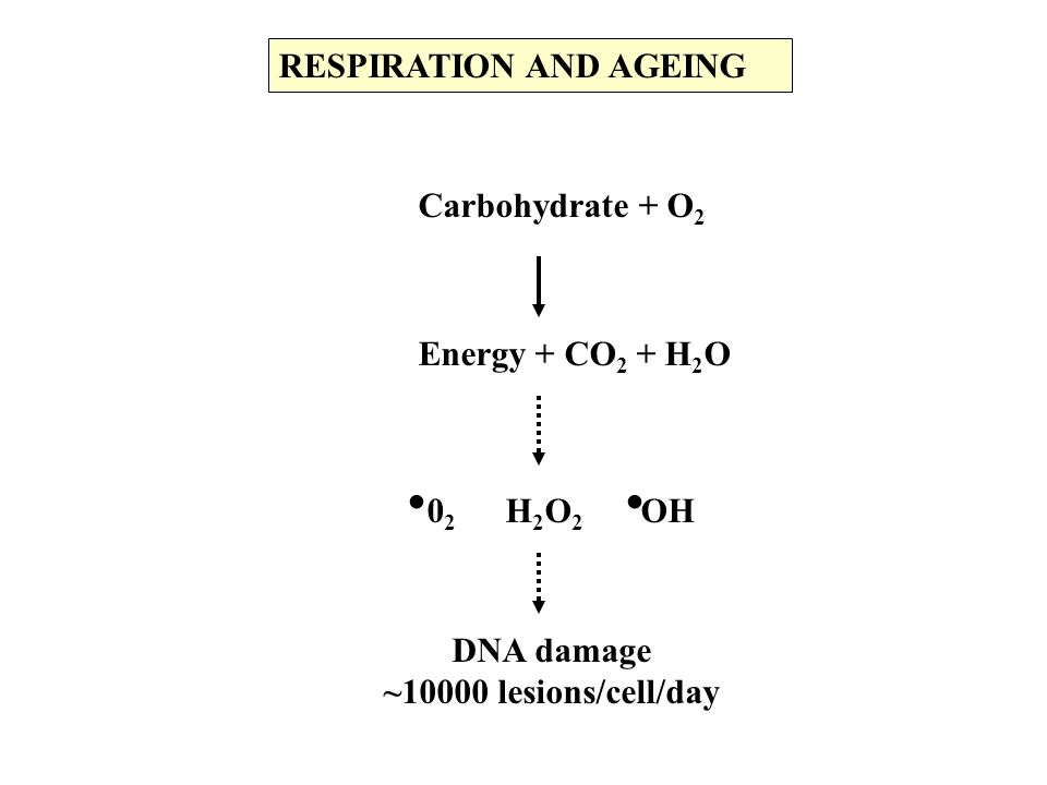 . RESPIRATION AND AGEING Carbohydrate + O2 Energy + CO2 + H2O