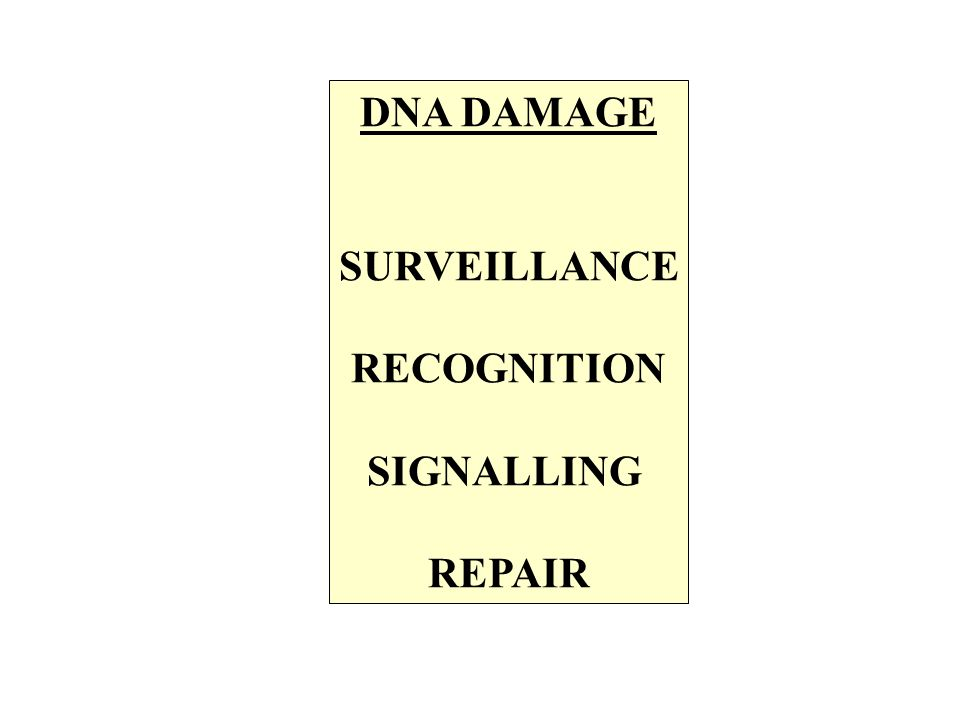DNA DAMAGE SURVEILLANCE RECOGNITION SIGNALLING REPAIR