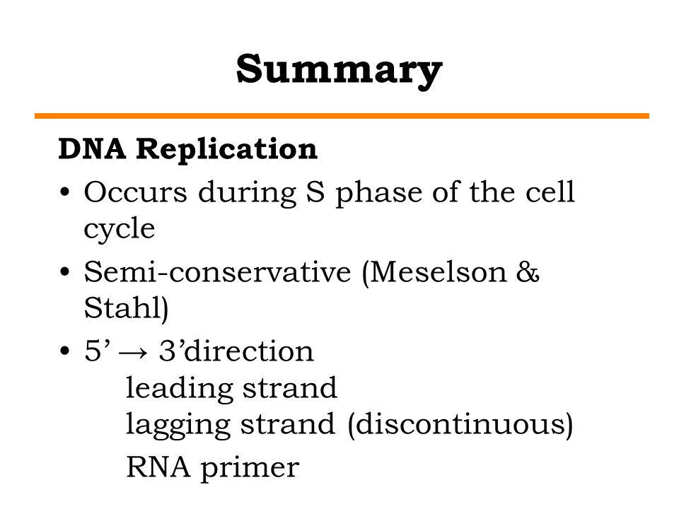 Summary DNA Replication Occurs during S phase of the cell cycle