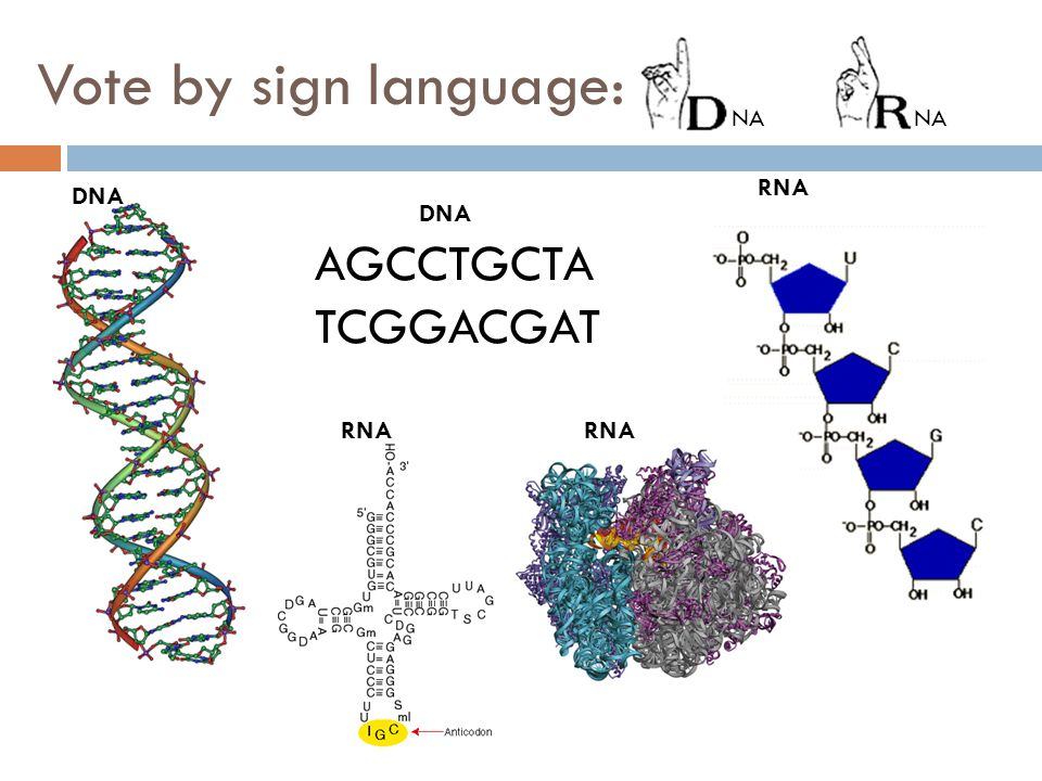 Vote by sign language: NA NA RNA DNA DNA AGCCTGCTA TCGGACGAT RNA RNA