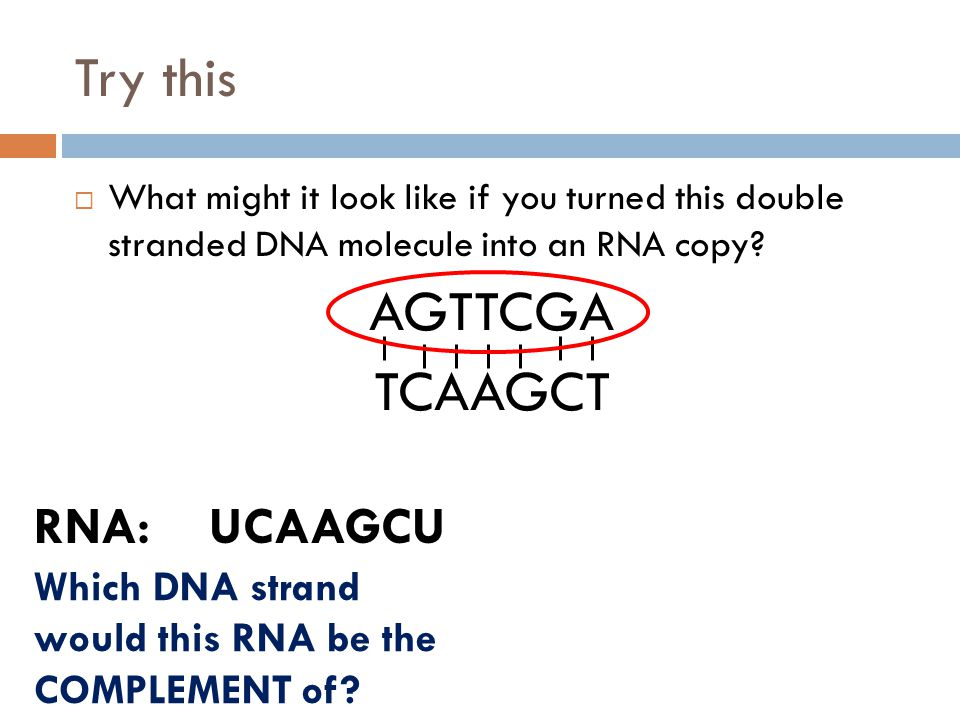 Try this AGTTCGA TCAAGCT RNA: UCAAGCU