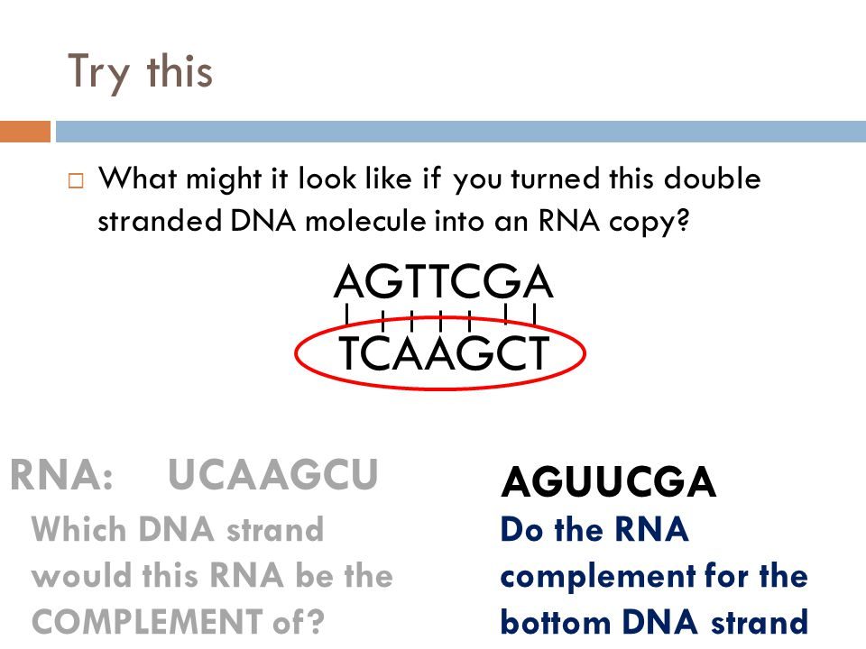 Try this AGTTCGA TCAAGCT RNA: UCAAGCU AGUUCGA