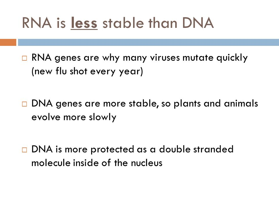 RNA is less stable than DNA