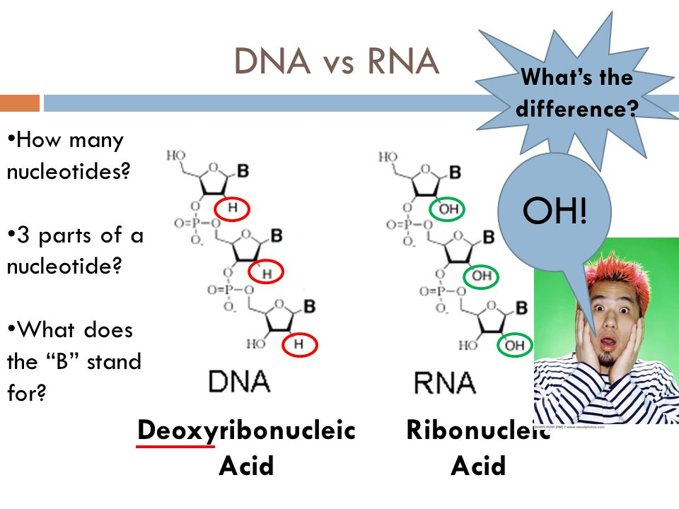 dna what is it essay