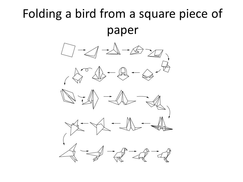 Folding a bird from a square piece of paper