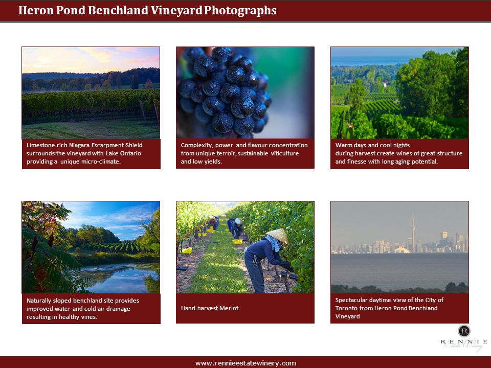 Heron Pond Benchland Vineyard Photographs