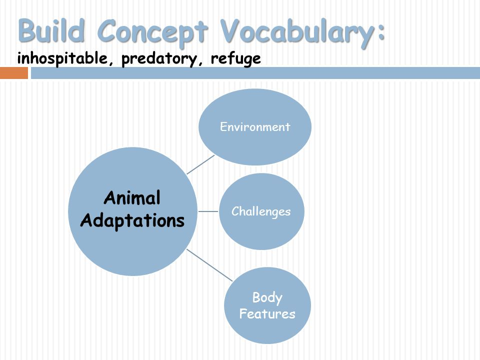 Build Concept Vocabulary: inhospitable, predatory, refuge