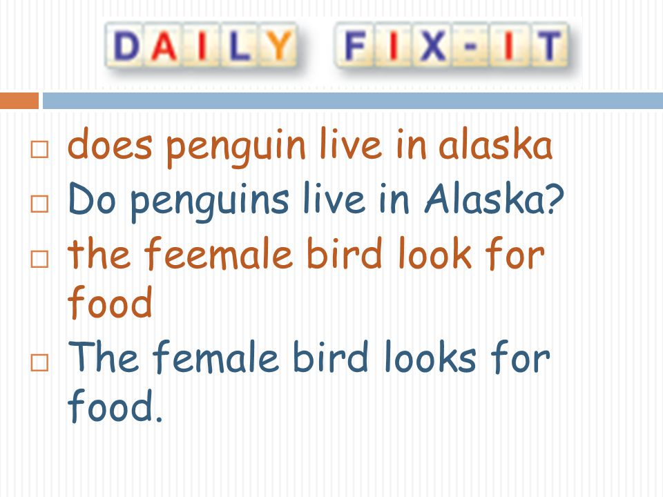does penguin live in alaska