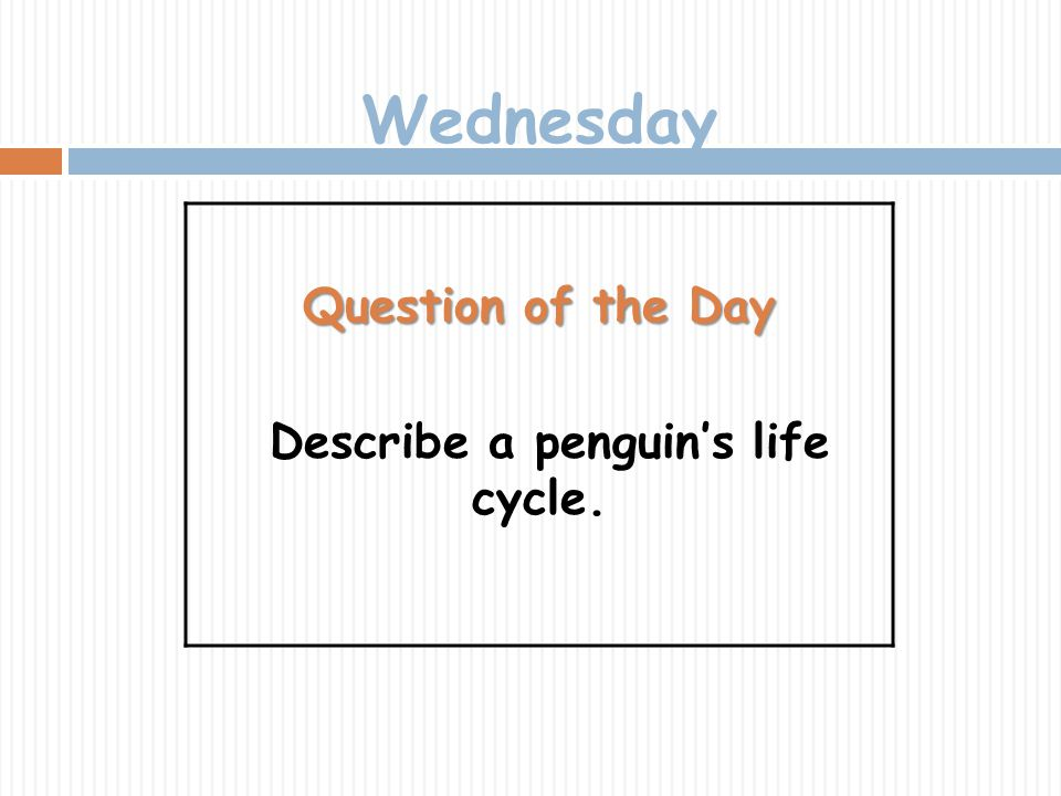 Describe a penguin's life cycle.