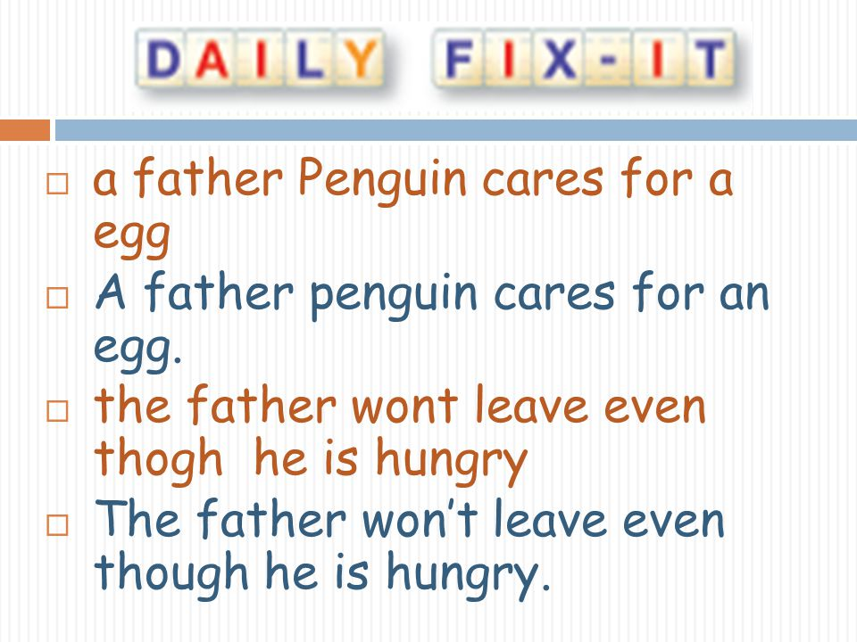 a father Penguin cares for a egg