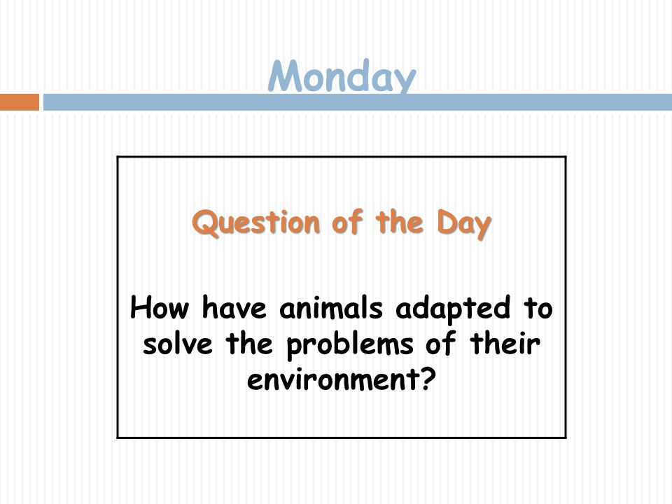 How have animals adapted to solve the problems of their environment