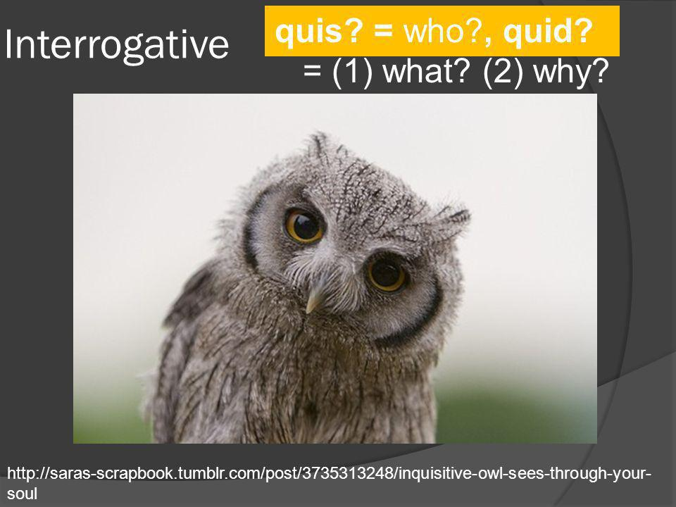 Interrogative quis = who , quid = (1) what (2) why