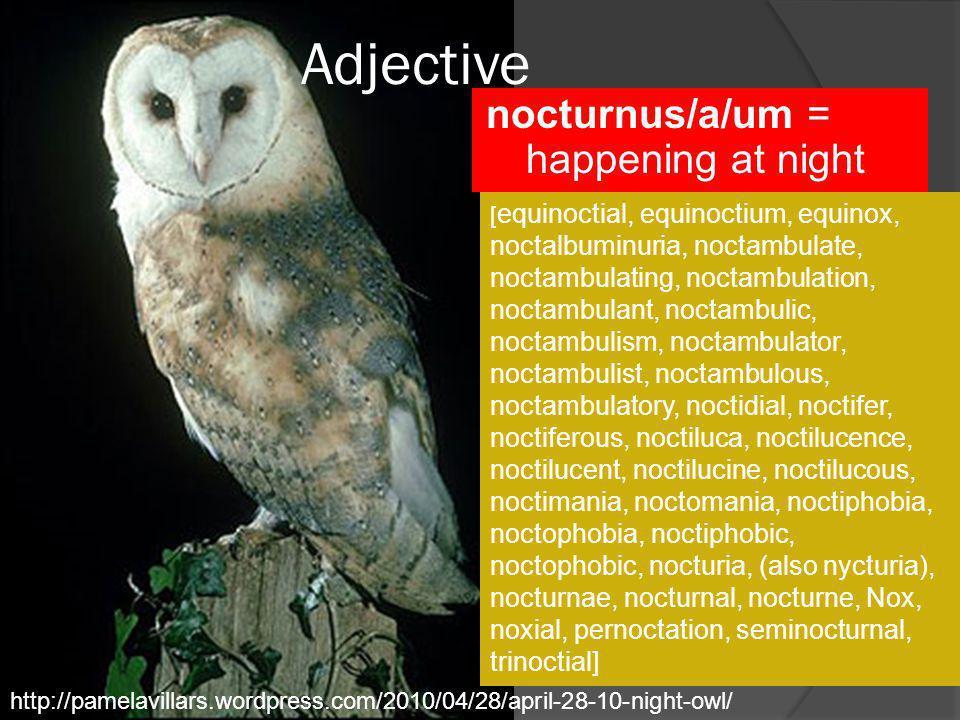 Adjective nocturnus/a/um = happening at night