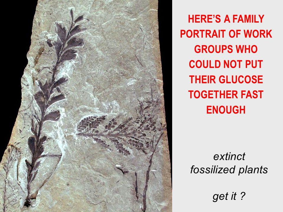 HERE'S A FAMILY PORTRAIT OF WORK GROUPS WHO COULD NOT PUT THEIR GLUCOSE TOGETHER FAST ENOUGH