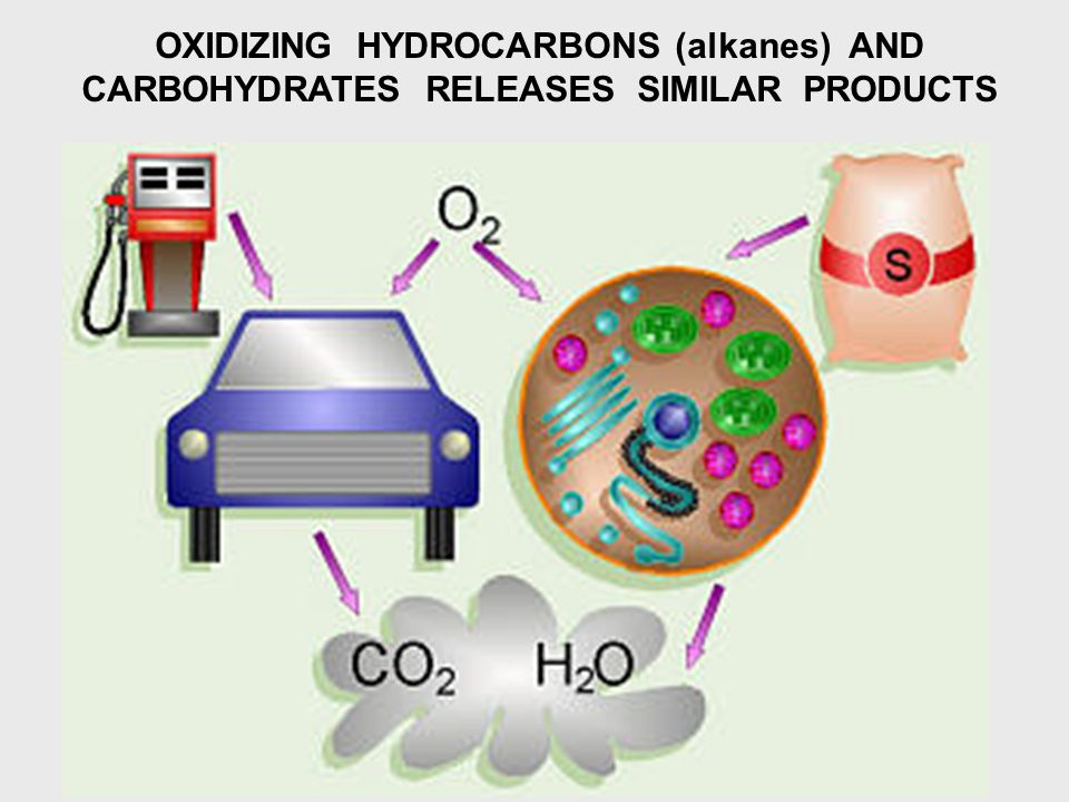 OXIDIZING HYDROCARBONS (alkanes) AND