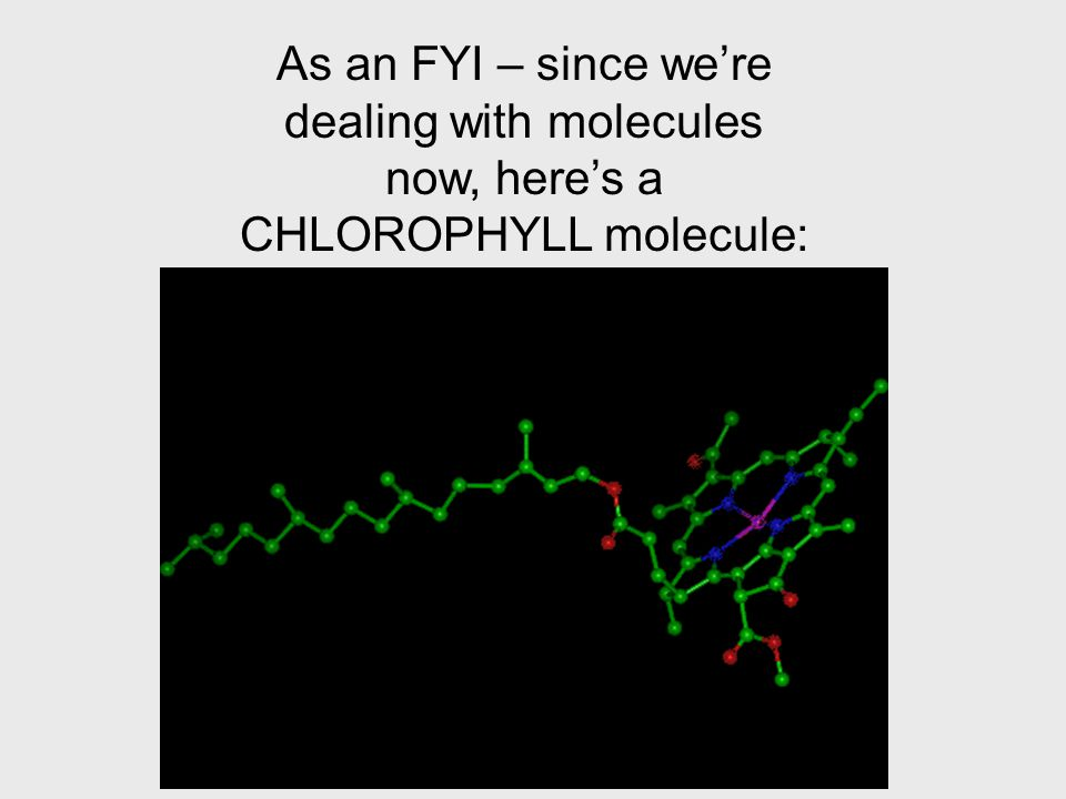 As an FYI – since we're dealing with molecules now, here's a CHLOROPHYLL molecule: