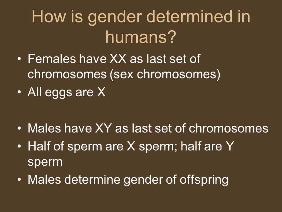 How is gender determined in humans