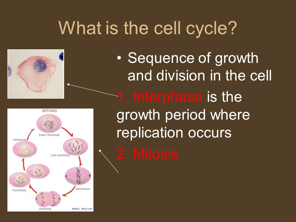 What is the cell cycle Sequence of growth and division in the cell