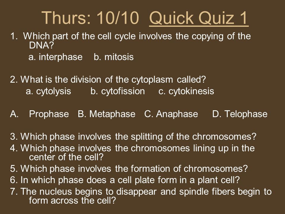 Thurs: 10/10 Quick Quiz 1 1. Which part of the cell cycle involves the copying of the DNA a. interphase b. mitosis.