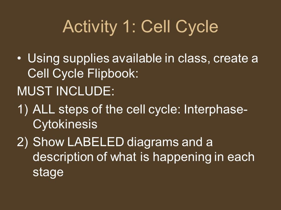 Activity 1: Cell Cycle Using supplies available in class, create a Cell Cycle Flipbook: MUST INCLUDE: